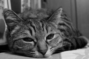 精神的に疲れた